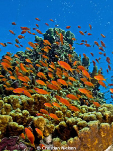 Colours of Egypt. 